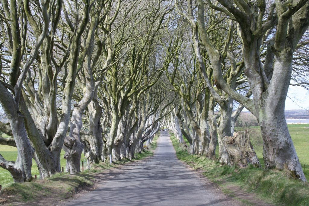 game of thones locations dark hedges